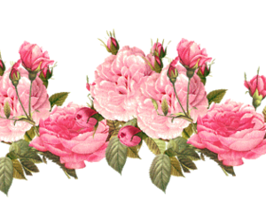 flowers, overlays, and overlay image