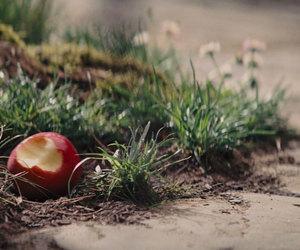apple, bite, and bitten image