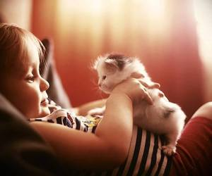 cat, cute, and kids image