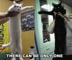 black, kitty, and funny image