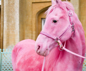 pink, horse, and pink horse image