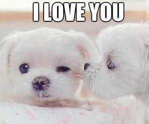 adorable, animals, and I Love You image