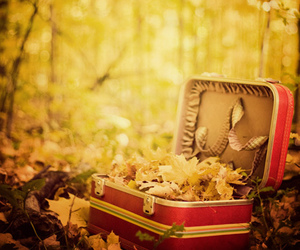 leaves, autumn, and suitcase image