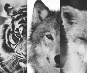 animals, fox, and black and white image