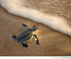 turtle, baby, and sea image