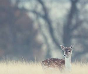 roe, meadow, and cute image