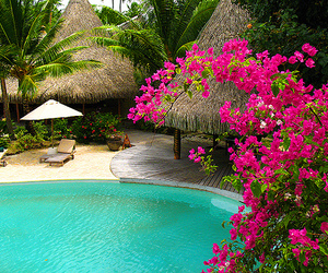 flowers, pool, and summer image