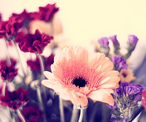 flowers, gerbera, and african daisy image