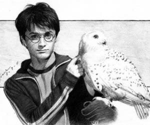harry potter, hedwig, and art image