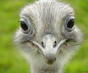 ostrich, zoo, and blijdorp image