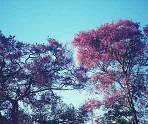 flowers, tree, and blue image