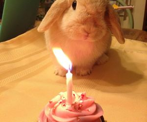 bunny, cake, and rabbit image