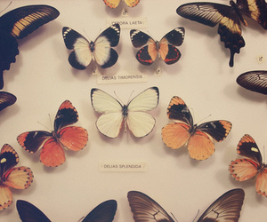 vintage, butterfly, and cute image