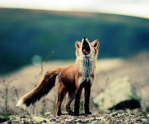 cute animals and fox image