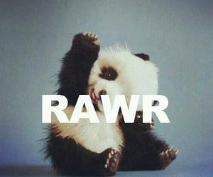 panda, rawr, and cute image