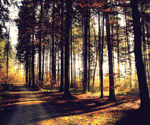 beautiful, lighting, and forest image