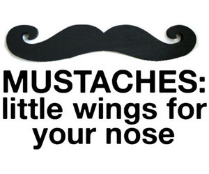mustache, wings, and funny image