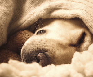 blanket, dog, and puppy image