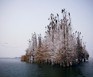 birds, Island, and water image