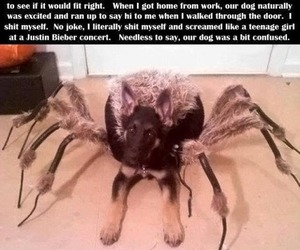 funny, dog, and spider image