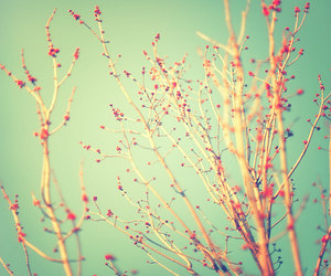 flowers, vintage, and tree image