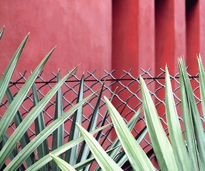 green, red wall, and plants image