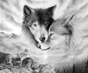 wolf, drawing, and animal image