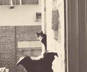 cat, dog, and window image