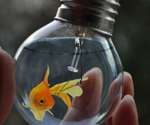 fish, water, and light image