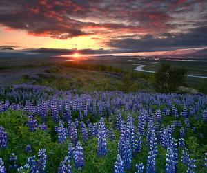 beautiful, nature, and field image