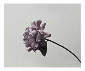 flowers and photography image