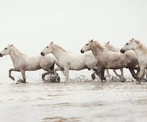 horses, pretty, and white image