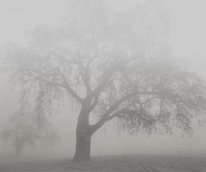 pale, tree, and grunge image