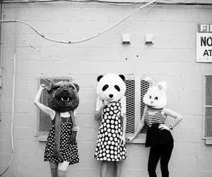 animal, panda, and black and white image