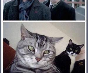 cat, funny, and sherlock image