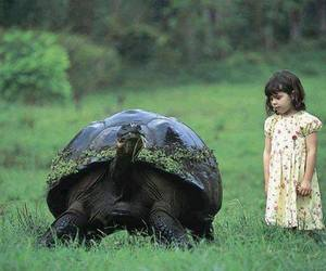 turtle and tortoise image