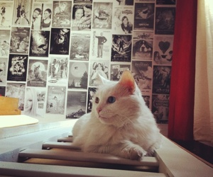 bedroom, cat, and cinema image