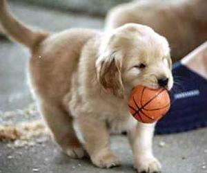 dog, puppy, and ball image