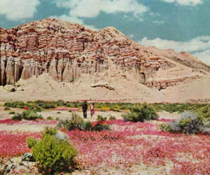 pink, vintage, and nature image