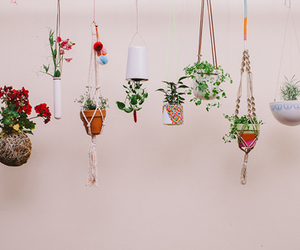 indie, plants, and flowers image