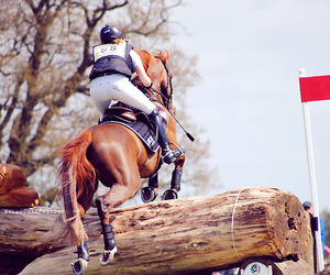 free, horse, and jump image