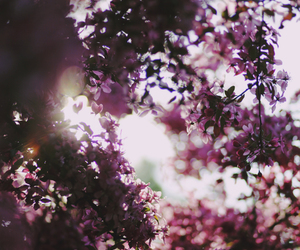 bokeh, pink, and flower image