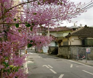japan, street, and nature image