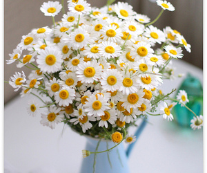 daisies, yellow, and pretty image