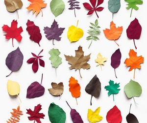 leaves and colorful image