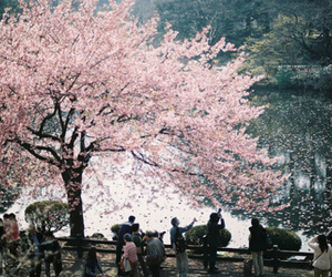tree, japan, and pink image