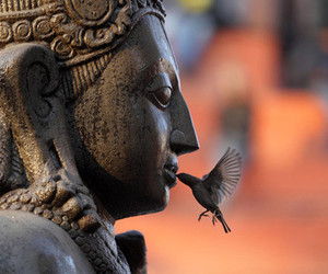 bird, Buddha, and kiss image