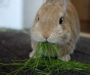 eating and bunny image