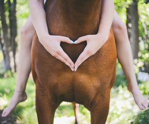 animal, friend, and heart image