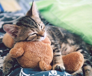 cat, cute, and cuddles image